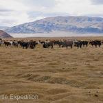 Mongolia Blog 6 034