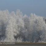 We enjoyed the winter wonderland created by hoarfrost.