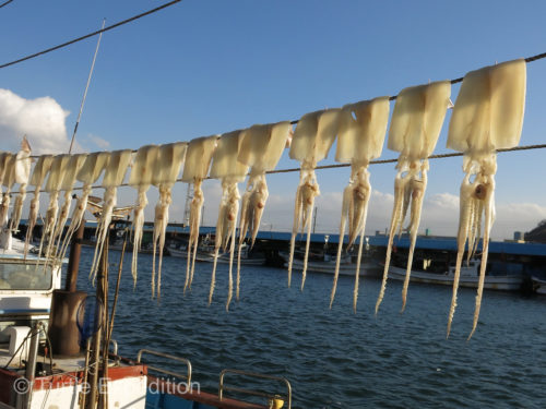 Squid are drying in the cold winter air.