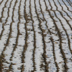 A rice stubble field after a brief snow storm offered an interesting perspective.