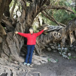If you want to feel young, wrap your arms around a 400-year-old olive tree.