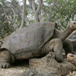 Famous Lonesome George(Internet source)